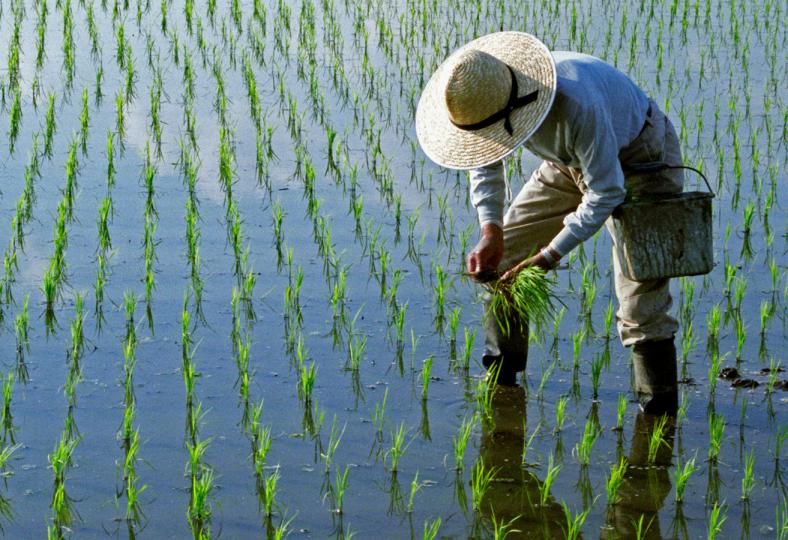 Les robots, nouveaux fermiers de la Chine ?