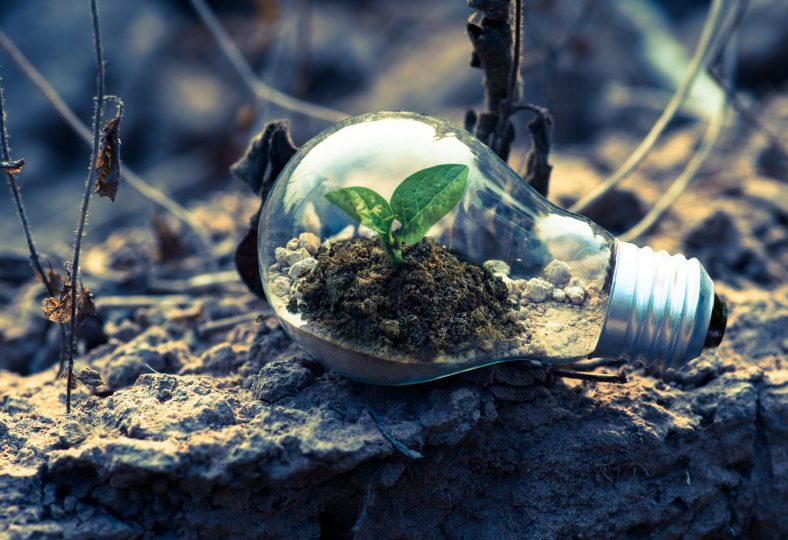 Comment le boom de l'énergie verte challenge les acteurs traditionnels